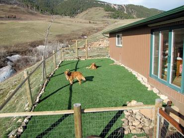 Artificial Grass Photos: Artificial Grass Installation Tumwater, Washington Artificial Turf For Dogs, Dogs Park