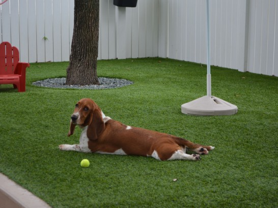 Artificial Grass Photos: Artificial Turf Cost Black Diamond, Washington Dog Parks, Grass for Dogs