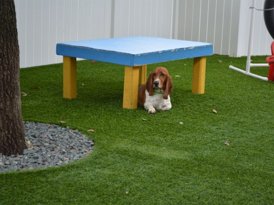 Artificial Grass Photos: Green Lawn Moses Lake North, Washington Drainage, Grass for Dogs